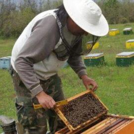 Προγράμματα μελισσοκομίας 2020-2022